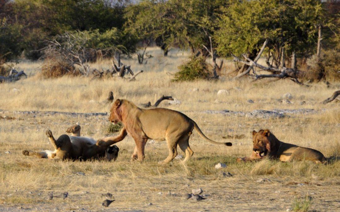 Safari en África, ¡encuentra la información que buscas aquí!