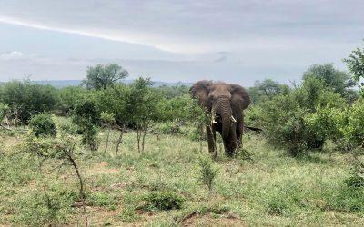Safari en el Kruger, ¡estos son los mejores consejos!