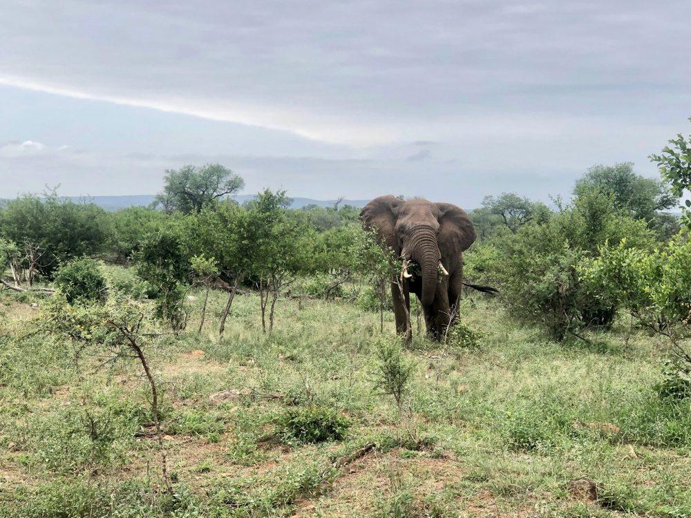 safari en el kruger