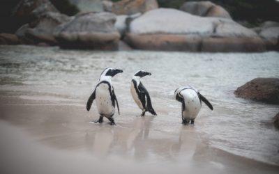 Playas más bonitas de Sudáfrica